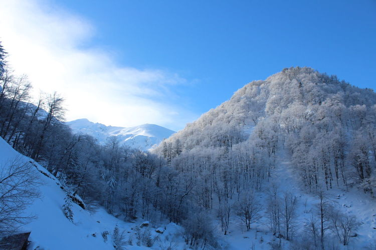 Tree Mountain Snow Cold Temperature Winter Blue Snowcapped Mountain Pine Tree Pinaceae Forest Deep Snow Mountain Peak