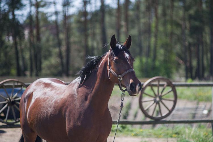 Лошадь Minsk Minsk,Belarus PENTAX K-1 DenisBurmakin Takumar 135mm F2.5 Horse Oil Pump Portrait Horsedrawn Horse Cart