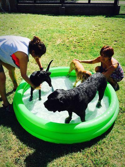 Dog❤ Happy Time Swimming Santa Fe