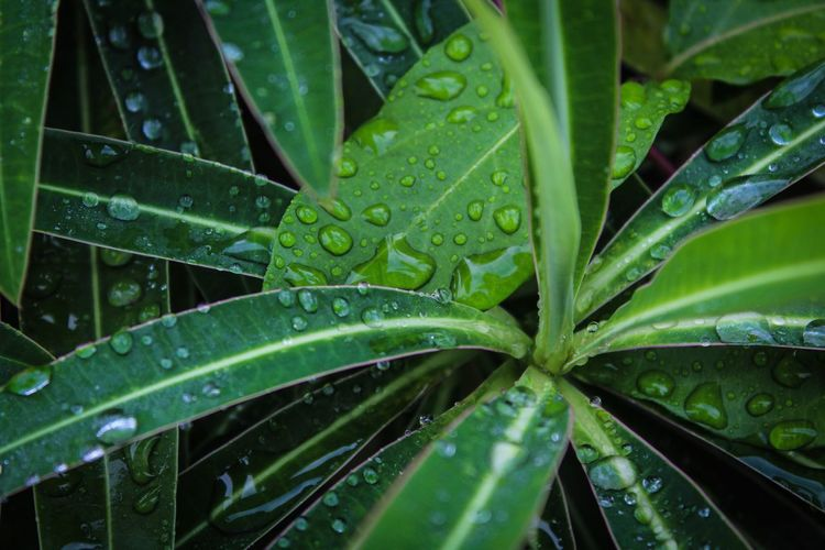 Leaf Green Color Drop Wet Water Nature Growth Freshness RainDrop Close-up Plant No People Full Frame Beauty In Nature Purity Backgrounds Outdoors