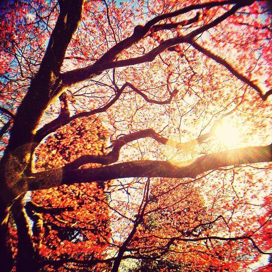 Sun Tree Sky Skyporn
