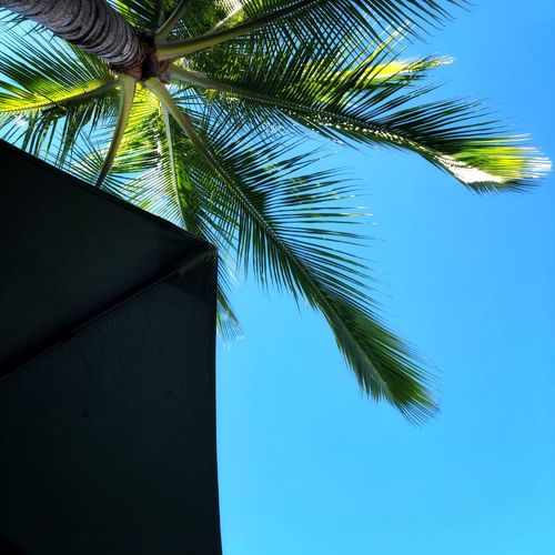 Shade Unbrella
