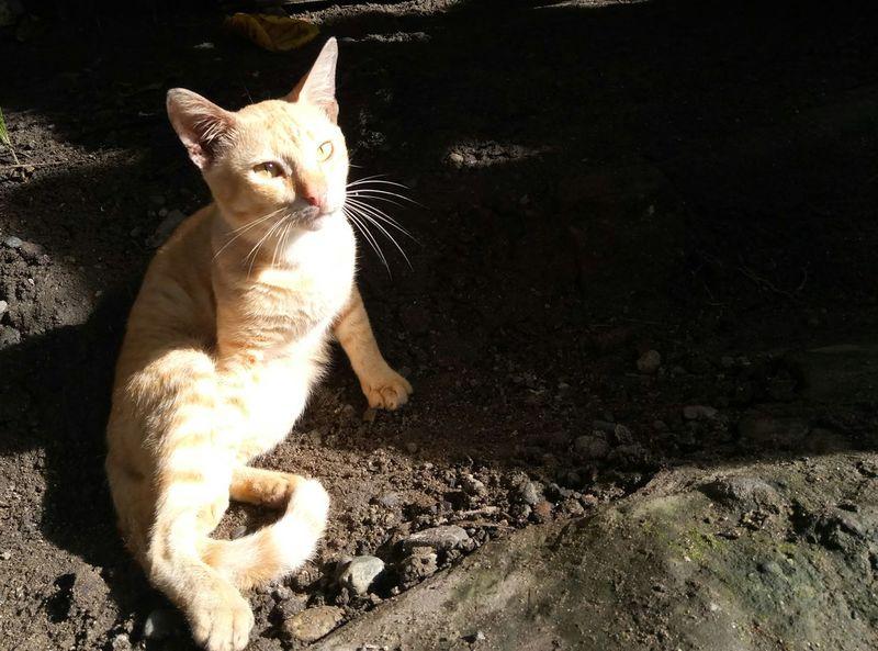 Eyeem Philippines One Animal Domestic Cat Domestic Animals Animal Themes Pets Feline Mammal No People Day Outdoors