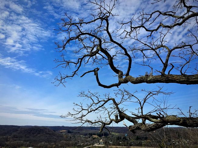Found this cool but creepy looking tree while hiking on top of a hill overlooking Richland Center. Tree Nature Sky Bare Tree Beauty In Nature Scenics Tranquility Branch Tranquil Scene Tree Trunk Landscape View Of The Town Low Angle View Small Town Small Town USA Overlook Outdoors Cloud - Sky Wisconsin Wisconsin Life Creepy Trees The Great Outdoors - 2017 EyeEm Awards The Great Outdoors - 2017 EyeEm Awards Sommergefühle