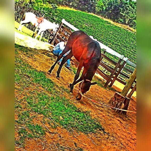 Coisa mais linda 😍🐴😍💕 Farao Potro Lindo  Apaixonada Cavalos Lovehorses