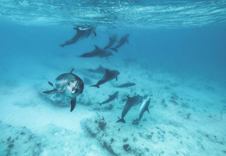 School of fish swimming undersea