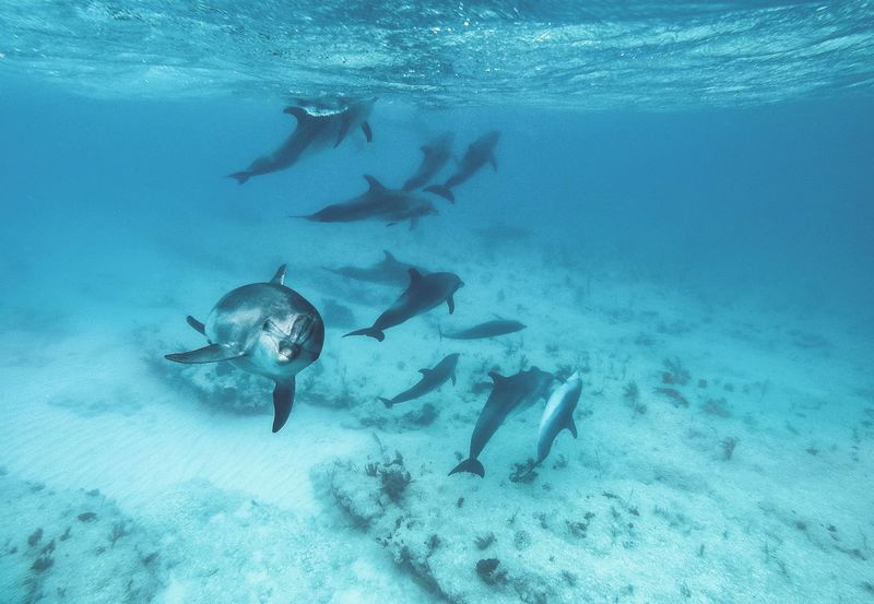 🐬15 strong, with the playfull one tagging along🐬~ UnderSea Underwater Scuba Diving Sea Sea Life Animal Wildlife Animals In The Wild Nature Swimming Water Beauty In Nature Animal Themes Adventure Grandturk Gopro Scuba Diving Swimming Summer Paradise Turksandcaicos Diving Beach The Great Outdoors - 2017 EyeEm Awards Perspectives On Nature
