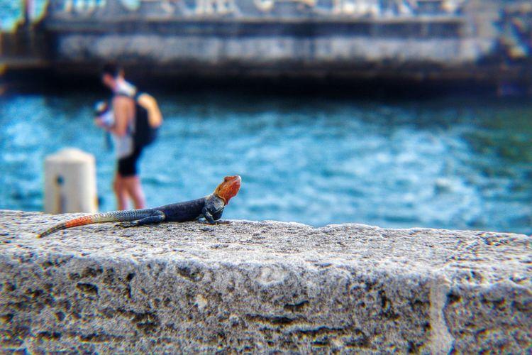 Say hello to my little friend Lizard Reptile Bokeh Nature Fauna Colorful Small Pose