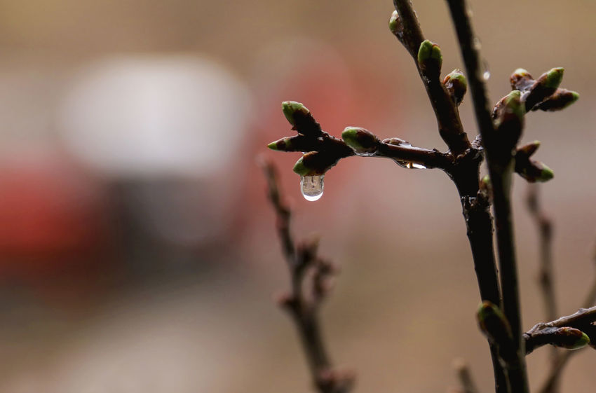 Awakening of nature Awakening Of Nature Beauty In Nature Branch Close-up Day Drop Drops Of Water Focus On Foreground Freshness Growth Nature No People Outdoors Plant Sprigs Spring Spring Rain Springtime Twig