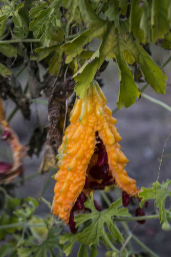 Beauty In Nature Close-up Day Fragility Freshness Growth Leaf Nature No People Outdoors Plant