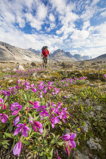 Scenic view of flowering plants by mountains against sky