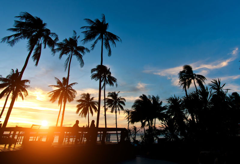 Beach Beauty In Nature Cloud - Sky Coconut Palm Tree Growth Nature No People Outdoors Palm Leaf Palm Tree Plant Scenics - Nature Sea Silhouette Sky Sunlight Sunset Tranquil Scene Tranquility Tree Tropical Climate Tropical Tree Water