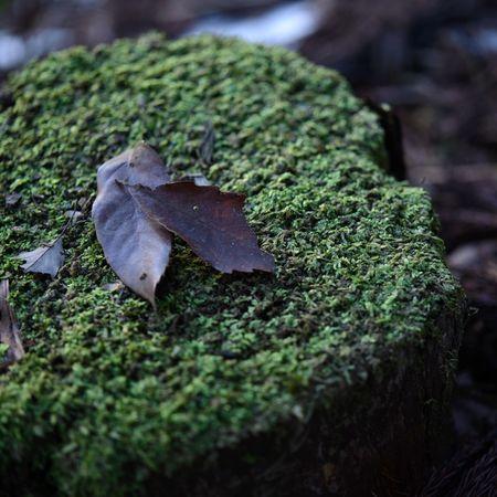 Bed of leaves Depth Of Field Lovehappa EyeEm Nature Lover Getting Inspired TheMinimals (less Edit Juxt Photography) EyeEm Best Shots - Macro / Up Close Nikkor60mm
