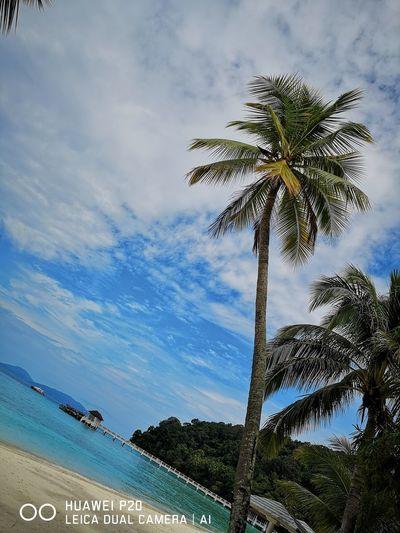 EyeEmNewHere Tree Palm Tree Sky Cloud - Sky Architecture