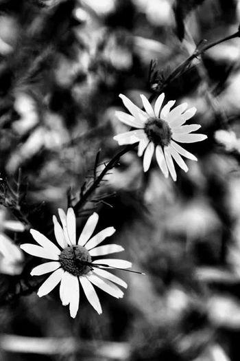 Black & White Taking Photos Flower Hello World