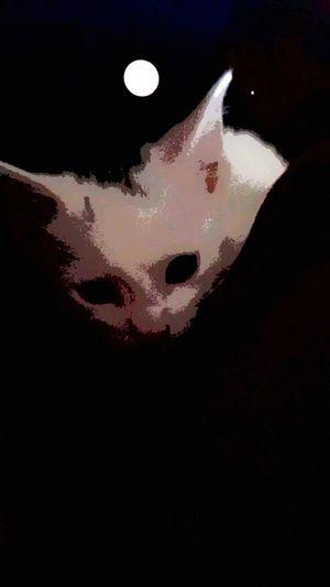 Cat Black White Black And White Babycat💕🐾😻 Umi EyeEm IPhone Photography Eye4photography  Pet Photography  Lovemyumi