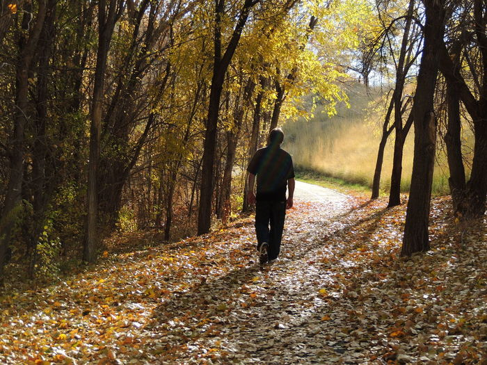 One Person Full Length Tree Walking Adult Autumn Sunlight Man Shadow Day Silhouette Fallwalk Fall Leaves Fall Colors, Thewayforward Fall Time Orange Color Trail Autumn Landscape_photography Path In Nature Naturewalks
