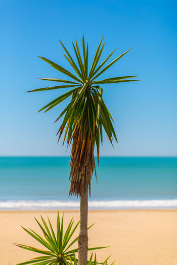 PALM TREE ON BEACH AGAINST CLEAR SKY