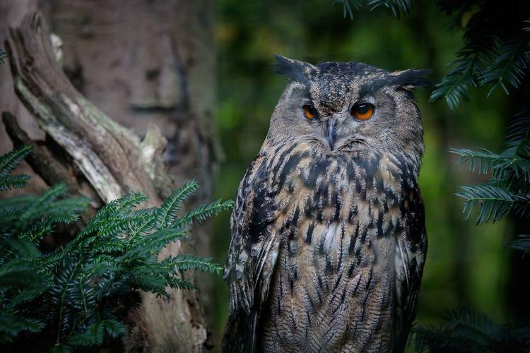 Portrait of owl perching on tree