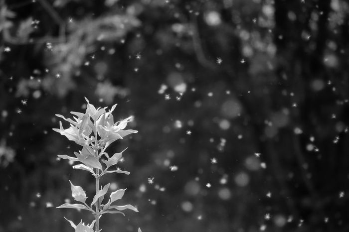 A c h o o ~ Tadaa Community | Shot From My Balcony | Nature | P510 | Nature_collection | Blackandwhite | EyeEm Bnw | Monochrome | My Best Photo 2015 | EyeEm Nature Lover The Great Outdoors