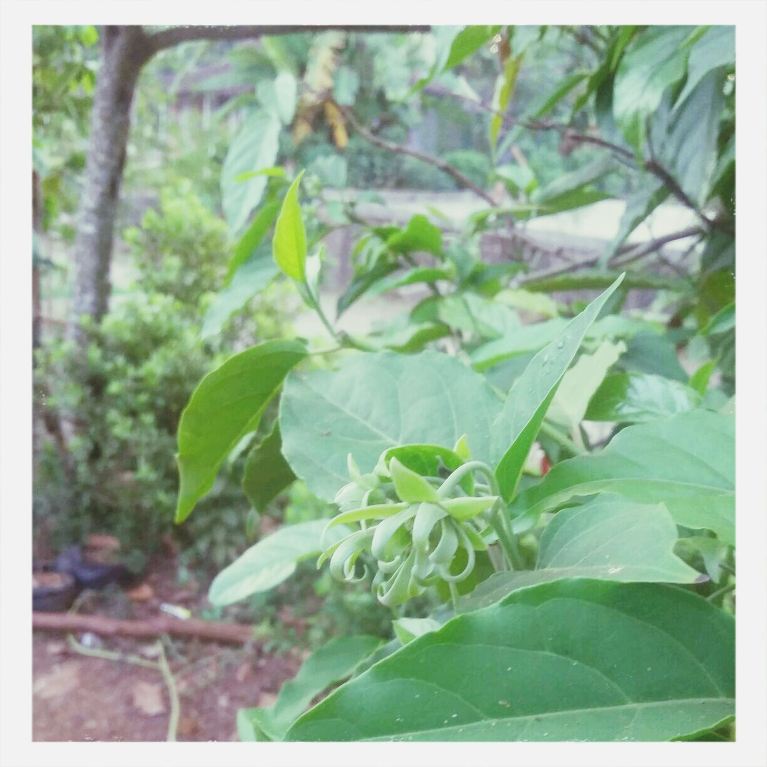 transfer print, leaf, growth, auto post production filter, green color, plant, close-up, nature, focus on foreground, beauty in nature, freshness, selective focus, day, outdoors, no people, growing, green, fragility, tranquility, sunlight