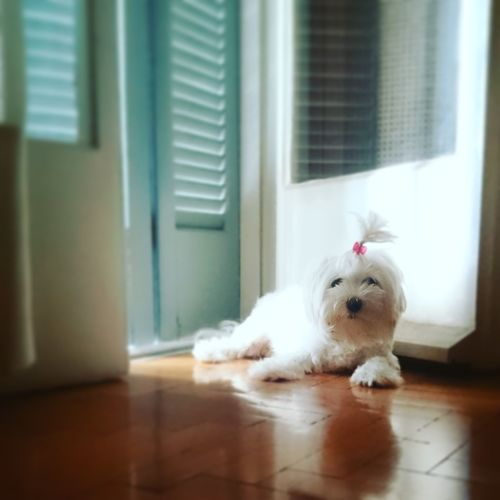Pets Sitting Day Animal Themes Lying Down Puppylove 😘😍🐶 Puppylife Puppy Photography EyeEmNewHere