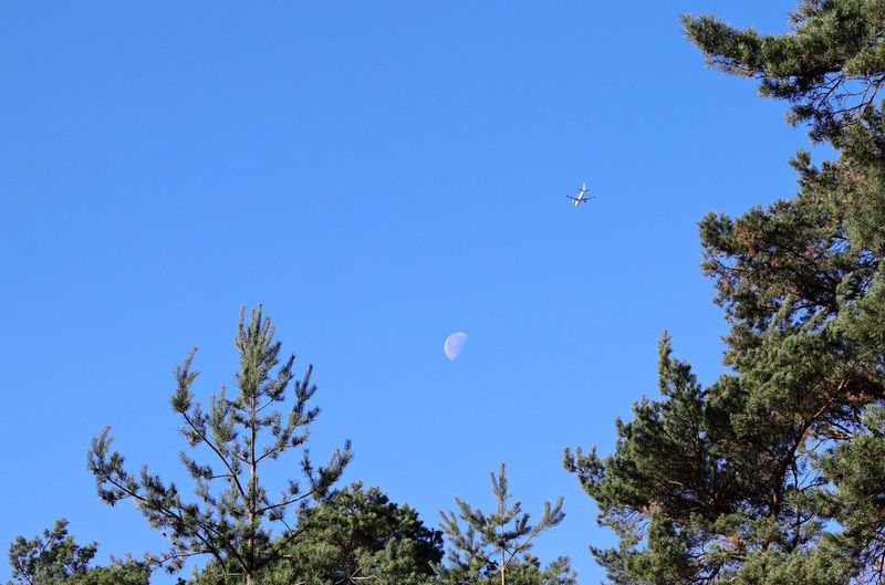 A plane flies