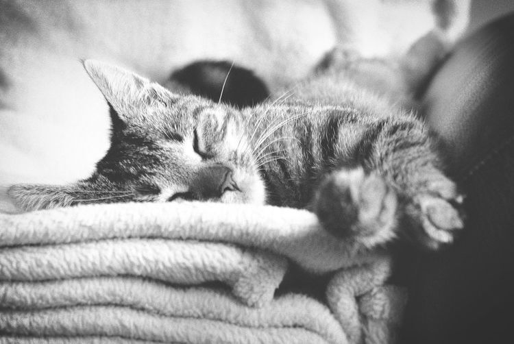 Cat Lovers Cats