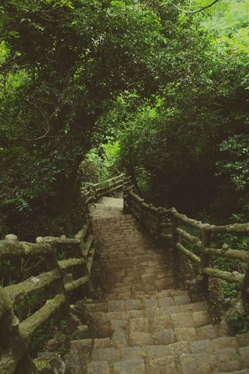 Staircase Steps Steps And Staircases Outdoors No People Beauty In Nature Day Nature Tree The Great Outdoors - 2017 EyeEm Awards Nature