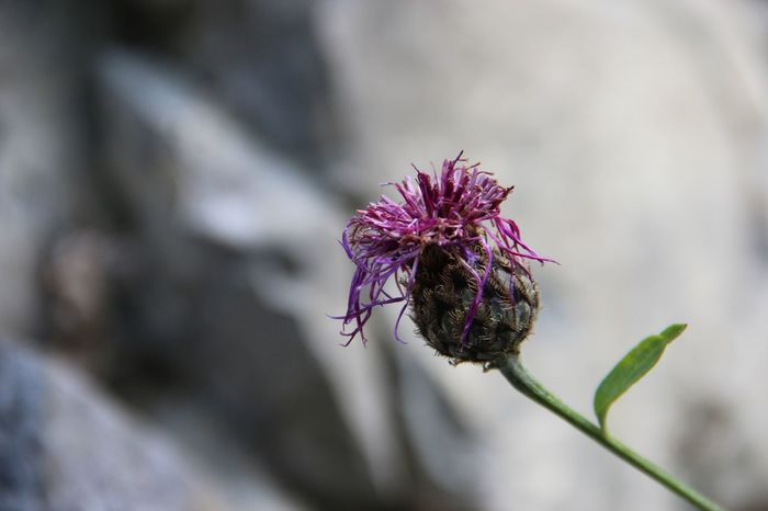 Beauty In Nature Blooming Close-up Day Flower Flower Head Focus On Foreground Fragility Freshness Growth Nature No People Outdoors Petal Plant
