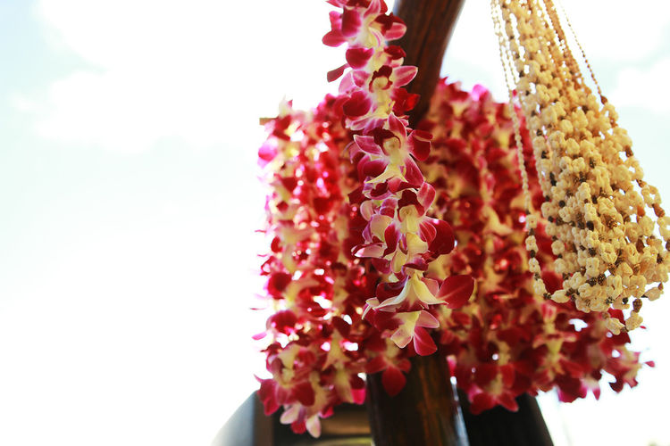 Lei for Hawaii Beauty In Nature Close-up Day Decoration Flower Focus On Foreground Freshness Growth Hanging Leaves Hawaii Lei Lei Low Angle View Nature No People Outdoors Petal Red Selective Focus Sky