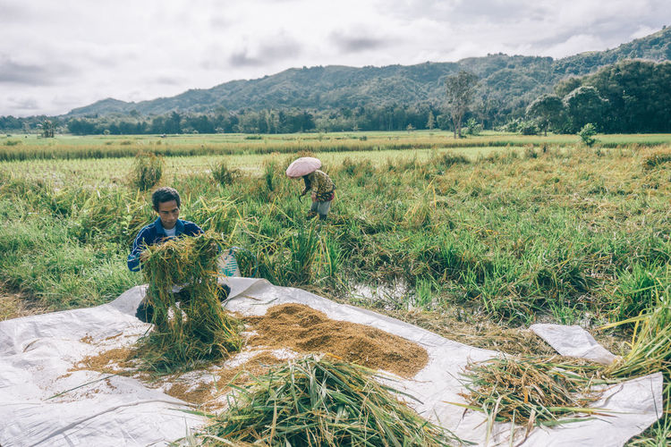 Farmers working at agricultural field