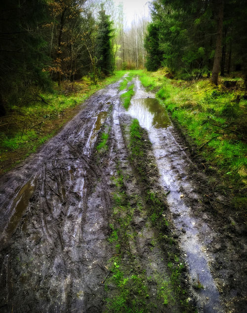 Matschweg Diminishing Perspective Dirt Road Empty Road Forest Green Color Humidity Mud No People Non Urban Scene Non-urban Scene Outdoors Road Soft Ground The Way Forward Tranquil Scene Vanishing Point Wet Woods