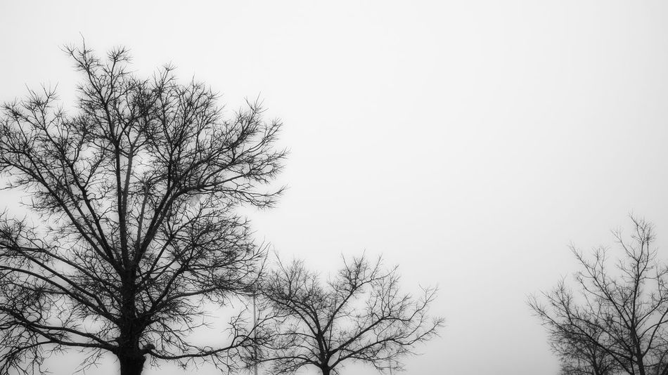 Silhouette Winter Bare Tree Beauty In Nature Branch Day Fog Nature No People Outdoors Sky Tree Up