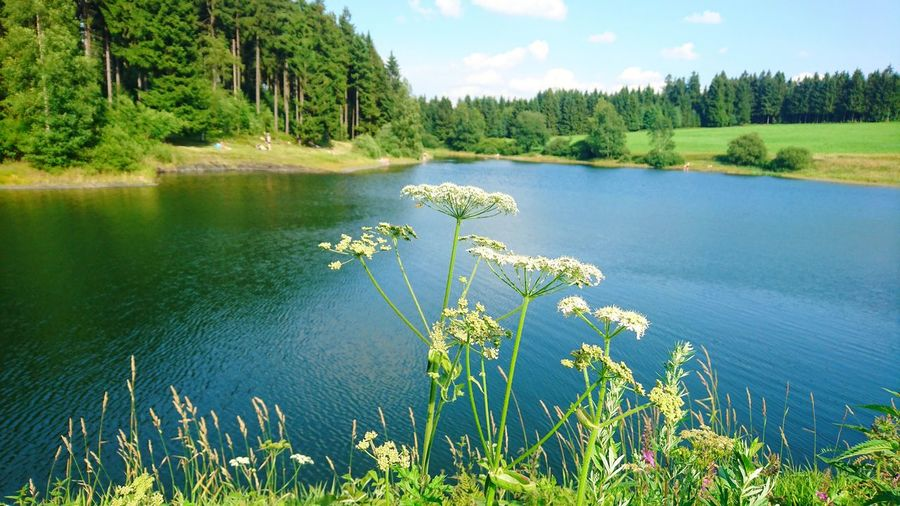 Schröterbacher Teich, Harz Tree Nature Lake Forest Pinaceae Water Landscape Scenics Pine Tree Tranquility Beauty In Nature Outdoors Wilderness Sky Vacations Summer No People Day Plant Travel Destinations Harz Bilder EyeEm Selects Beliebte Fotos Harz Mountains, Germany Summer Exploratorium