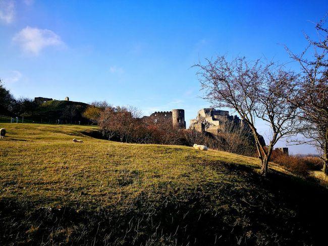 Outdoors Day Nature Hills Tourist Destination Devin Castle Castle Slovakia Autumn Autumn Colors