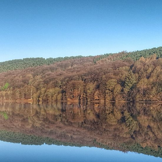 Perfect reflection. Nature Tranquil Scene Water Tranquility Beauty In Nature Tree Peak District  Nature Photography Nature Landscape Reflections In The Water Reflection Reflections