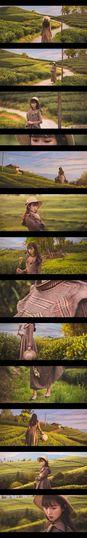 任性 Full Frame Backgrounds Wood - Material Vegetable Plant Green Color