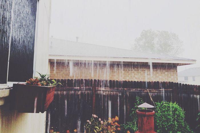 The Old Man Is Snoring Rain Raining Rainy Wet Showers Patio Suburbia Backyard Home Lifestyle Plants Garden Fence Neighborhood Neighbors Outside House At Home