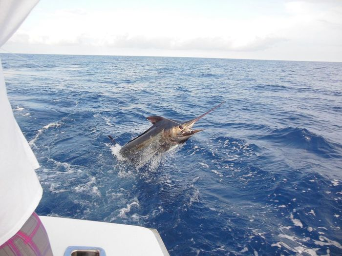 Trapped swordfish in sea against sky