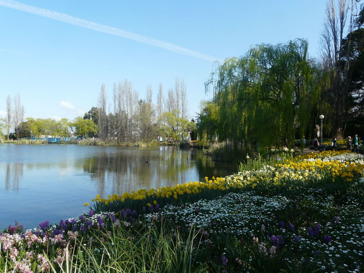 Beauty In Nature Blooming Canberra Daffodils Day Floriade  Flower Growth Lake Nature Outdoors Plant Scenics Sky Tranquil Scene Tranquility Tree Water
