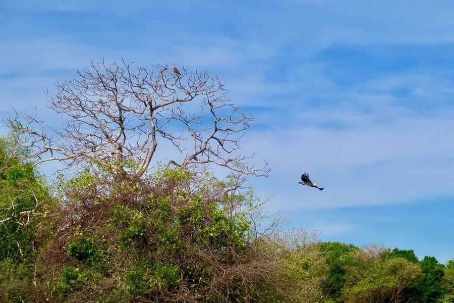 Safari 😍 Bird Animals In The Wild Flying One Animal Animal Wildlife Nature Tree Sky Outdoors Beauty In Nature Day Blue Animal Themes Low Angle View No People Spread Wings