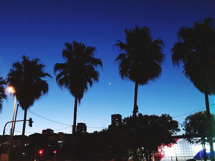 Moon Tree Sky