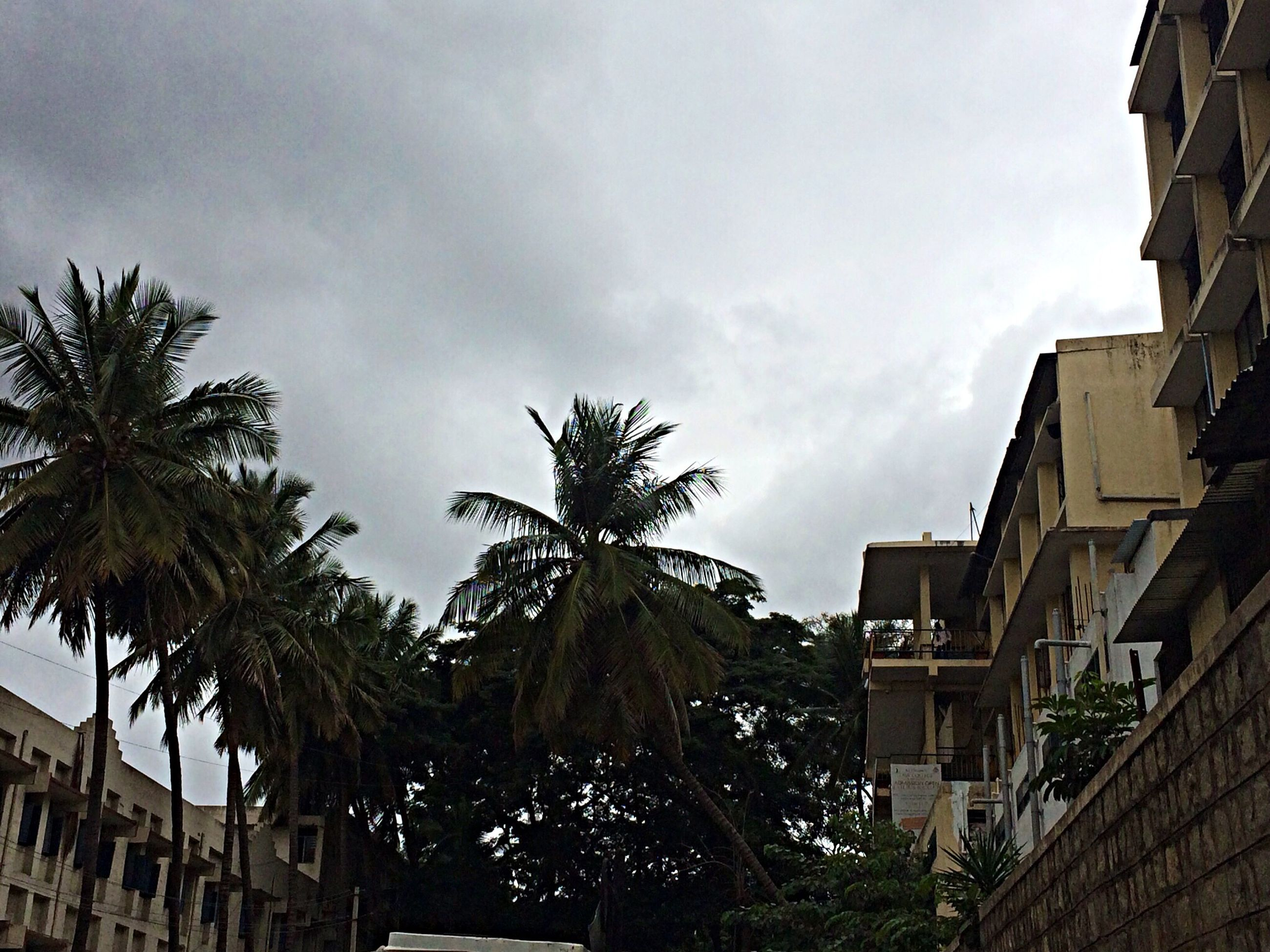 building exterior, architecture, built structure, palm tree, tree, sky, low angle view, residential building, house, residential structure, city, building, cloud - sky, cloud, outdoors, growth, sunlight, day, no people, street light