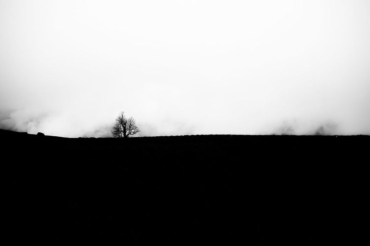 Monochrome Blackandwhite Black And White B&w Silhouette Nature Simplicity Minimalism Foggy From My Point Of View The Great Outdoors With Adobe Getting Inspired Getting Creative Deceptively Simple My Favorite Photo Abstract No People EyeEm Nature Lover Personal Perspective My Unique Style Absence Abstract Nature Tree Silouette & Sky The Great Outdoors - 2016 EyeEm Awards