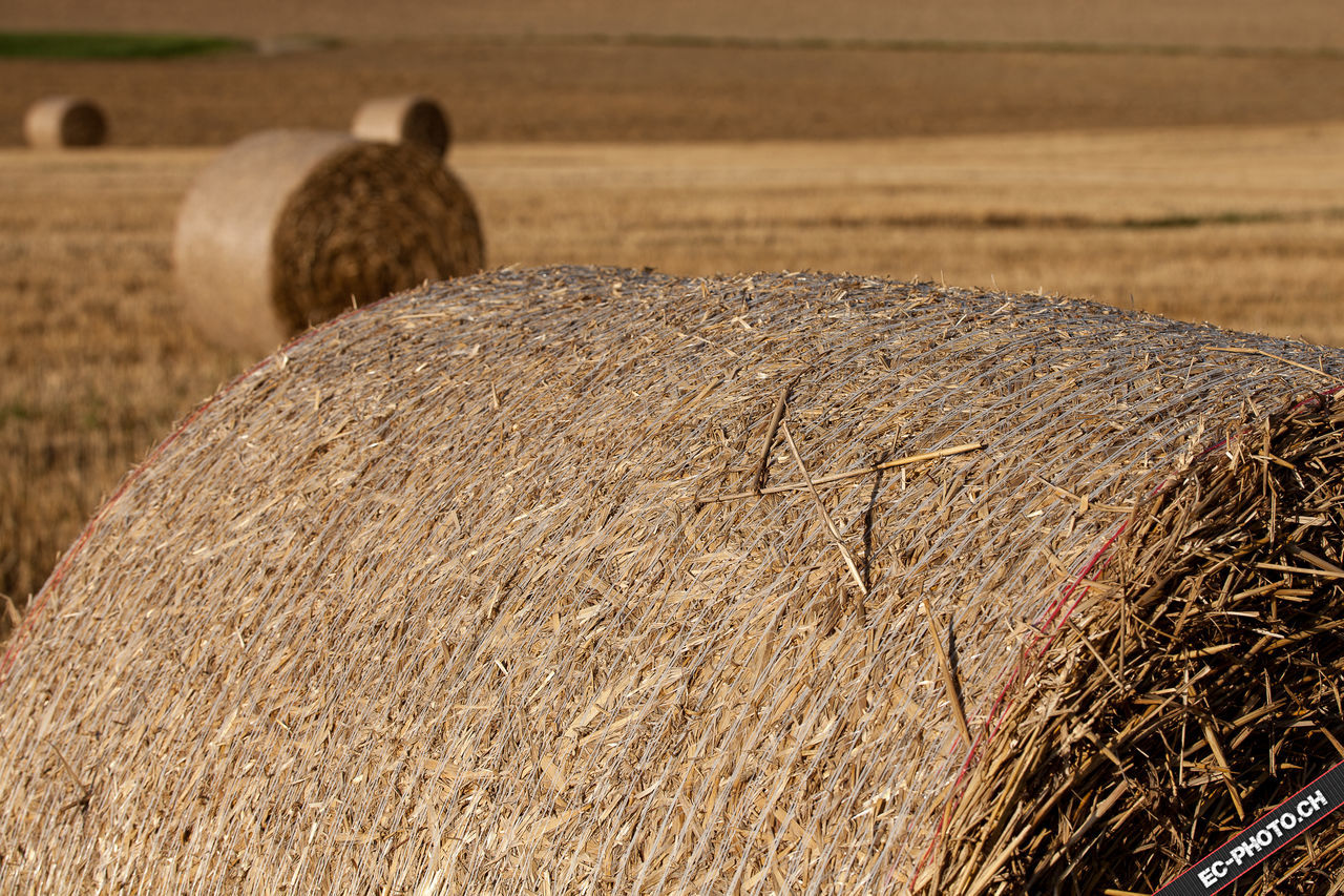 hay, bale, agriculture, field, hay bale, rural scene, farm, haystack, day, outdoors, nature, no people, landscape, animal themes, mammal