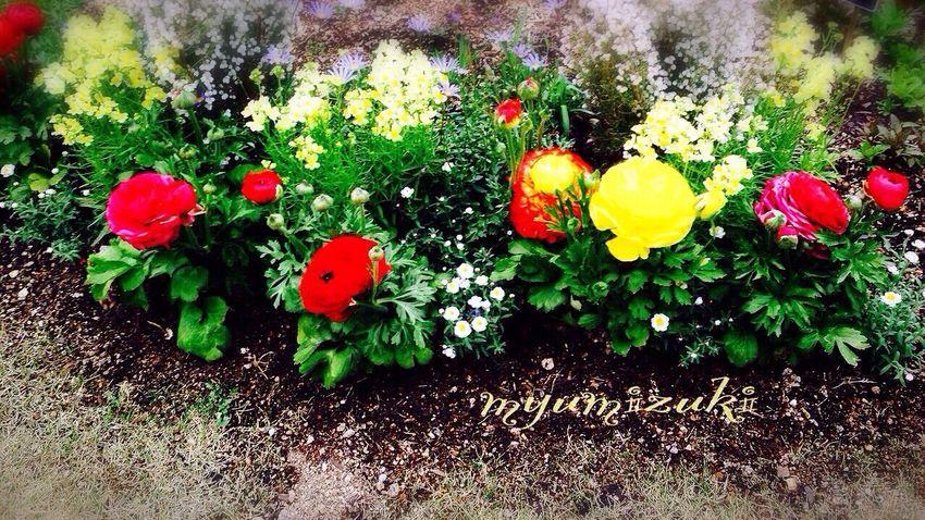 春…❤︎…探して*♪〜 Spring Spring Flowers Spring2015 **ふらわぁ** Flower Tokyo,Japan