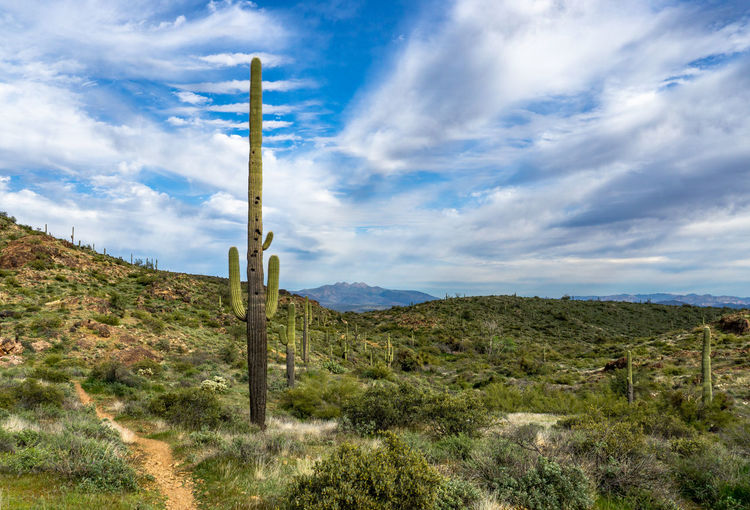 Scenic view of field against sky with saguaro cactus