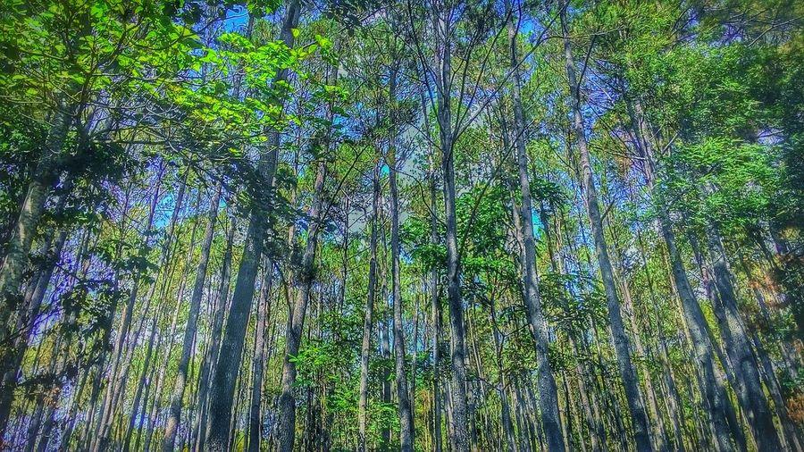 Geeeeerrrr...... Eyeem Popular Photos Enjoying Life Consigli Mountainview