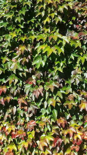 Close-up of leaves on tree